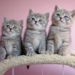 Top 10 Most Beautiful Cats